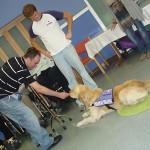 Terapia asistida con animales en el daño cerebral adquirido