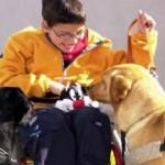 Perros de asistencia, ayuda técnica y apoyo para las personas con discapacidad