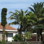 El Complejo Acamán organiza en Tenerife una jornada de sensibilización sobre el DCA